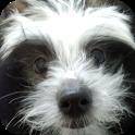 犬写真集③レオ君との出会い(!)チャイクレでんすけ君 icon