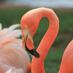 by Miranda Powers - Animals Birds ( #sooc )
