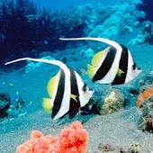 3D lovely fish 9