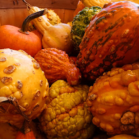 Gourds by Judy Dean - Artistic Objects Still Life ( orange, pumpkin, autumn, fall, gourds,  )