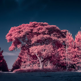 ... by Matheus Dalmazzo - Landscapes Forests ( moon, tree, infrared )